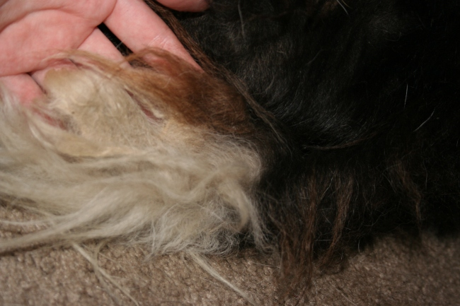 Matted Hair   Dream Big, Bark Loudly