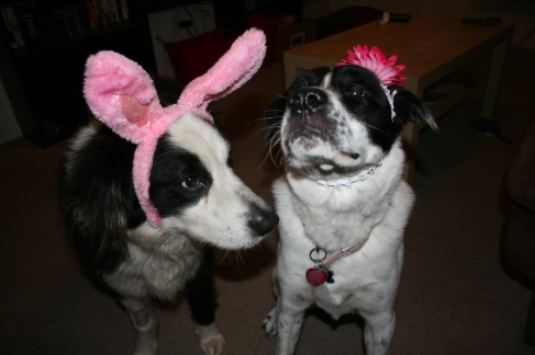 Brody and Lana wishing everyone a happy Easter   DreamBigBarkLoudly.com