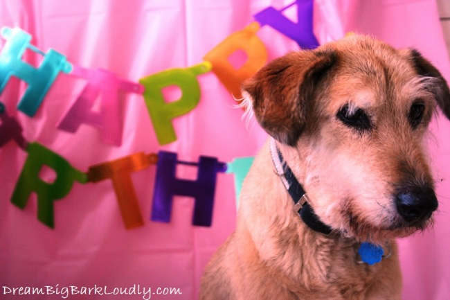 Lana celebrates her Adoption Day Anniversary | DreamBigBarkLoudly.com