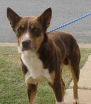 HARTMAN - Adoptable mixed breed male dog in Bainbridge, GA