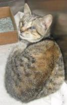 ROBIN - Adoptable female cat in Bainbridge, GA. She is blind, but still deserves a home!
