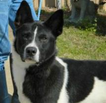 SONNY - Adoptable mixed breed male dog in Bainbridge, GA