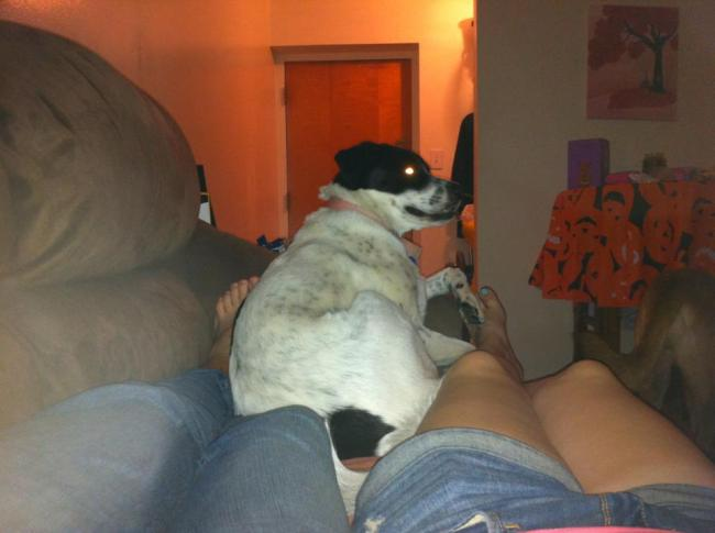 """""""10 Reasons I Chose A Mutt Over A Purebred"""" -A humorous, not preachy look at why one dog blogger chose her mixed breed"""