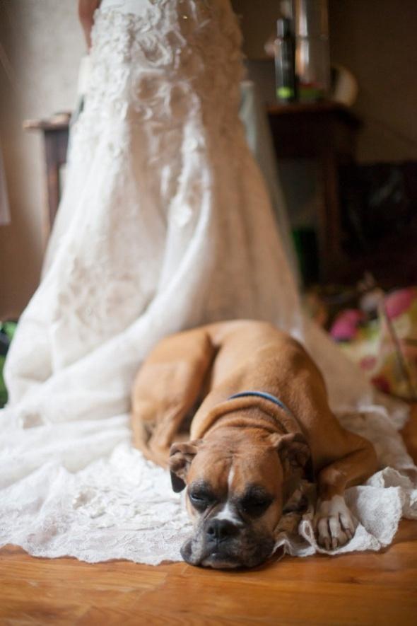 A Dog Themed Social Sunday
