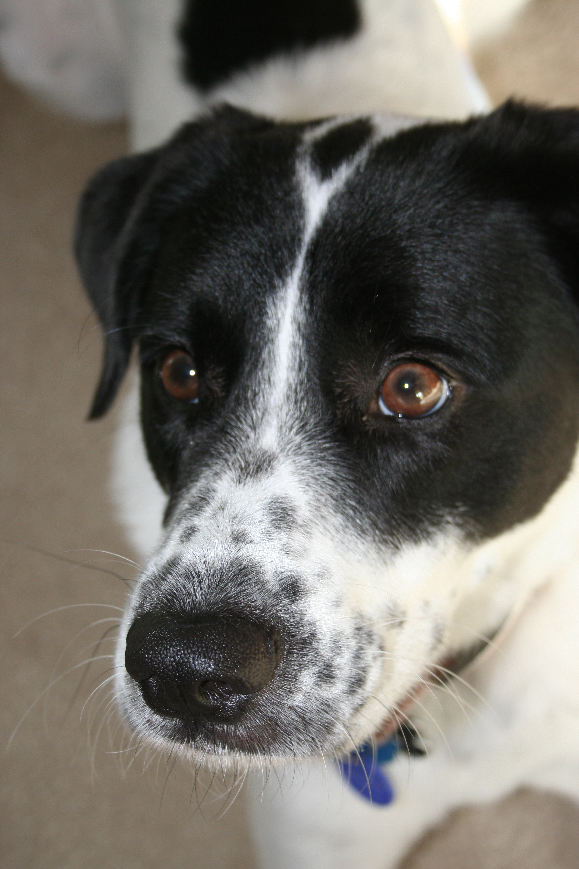 1000  images about mutt dogs! on Pinterest | Posts, Border collies ...