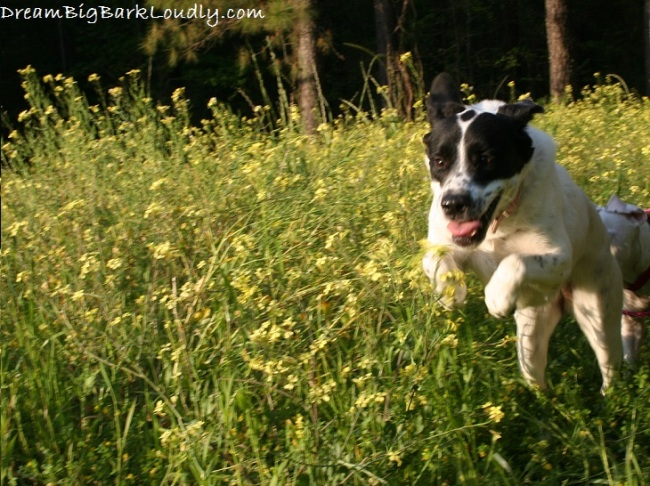 Tips For First Time Dog Owners